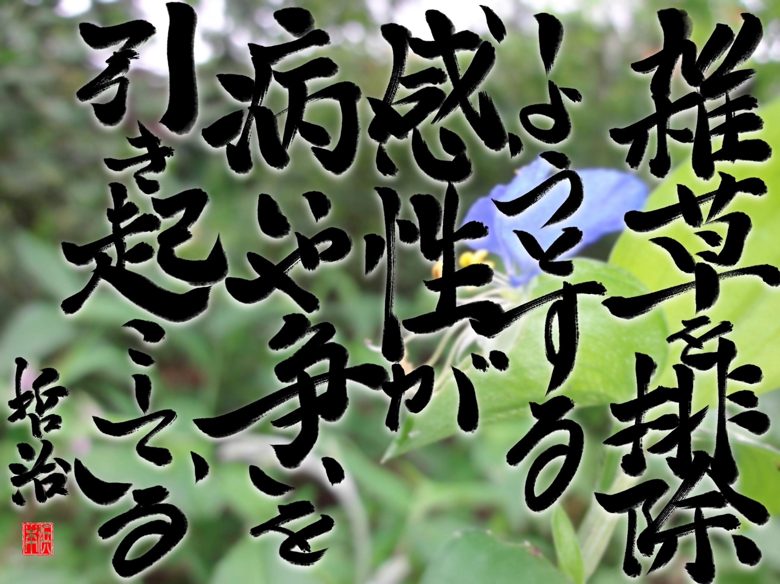 雑草を排除しようとする感性が、病や争いを引き起こしている。<1580>